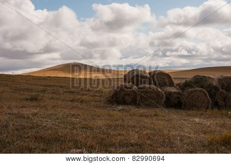 Grassland autumn scenery in China