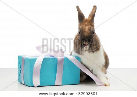 Brown bunny is near blue present box