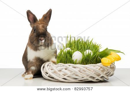 Brown bunny with wicker box and eggs