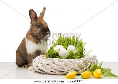 Cute bunny with wicker box and eggs