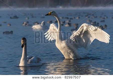 Swan Lake Winter Birds