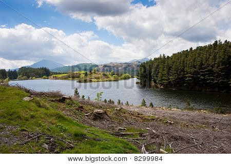 Mountain forestry scene with tree stumps lake and sunlit island