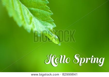 Water drop on fresh green leaf on green background. Hello Spring concept