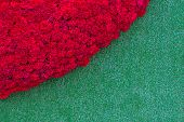 image of carnation  - Red carnation flower on the fresh spring green grass background - JPG