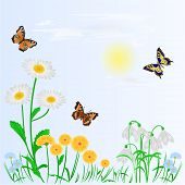 stock photo of daisy flower  - Spring background spring flowers and butterflies place for text vector illustration - JPG