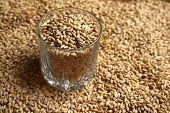 stock photo of malt  - Whiskey tumbler glass with malt grains on a layer of malt - JPG