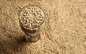 stock photo of malt  - Tall beer glass with barley malt grains on a layer of malt - JPG