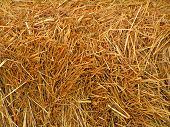image of hay bale  - Hay Bale in Autumn - JPG