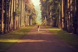 picture of girl walking away  - The girl walking down the road surrounded by palm trees to the mountains far away - JPG