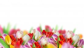 foto of quail egg  - tulips over blurred green background - JPG