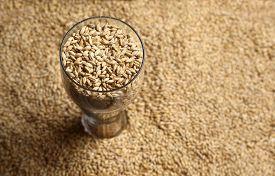 stock photo of malt  - Tall beer glass with barley malt grains on a layer of malt - JPG