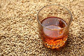 foto of malt  - Tumbler glass with whiskey standing on barley malt grains - JPG