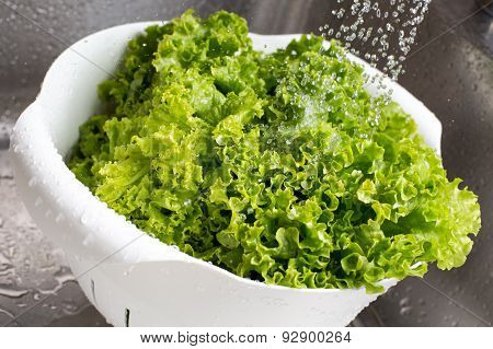 Fresh Lettuce Rinsed With Water In The White Colander