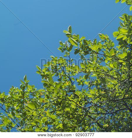 Foliage And Sky
