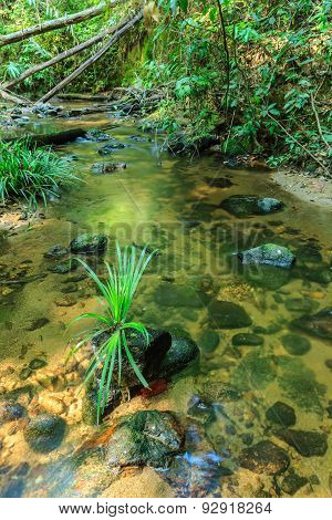 Babbling Brook In Green Forest