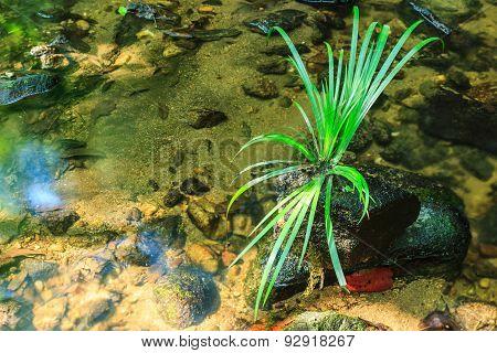 Green Grass On Stone In Stream.