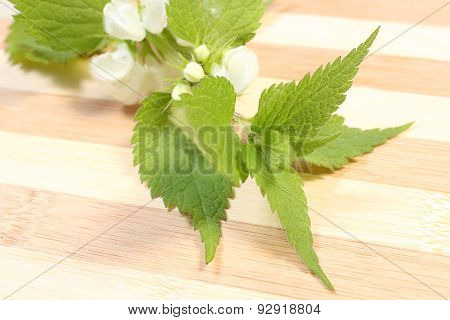 Fresh Nettle With White Flowers
