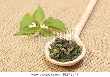 Dried Nettle On Wooden Spoon And Fresh Plant