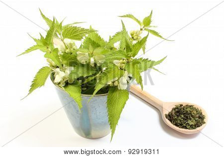 Fresh Nettles With White Flowers In Cup And Dried Plant