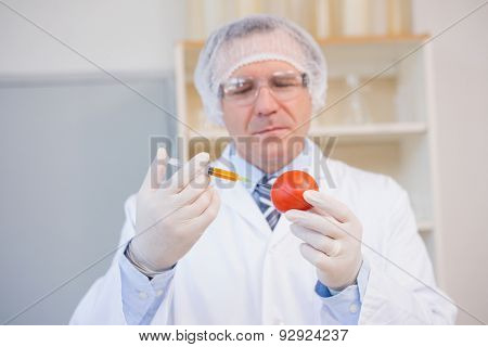 Food scientist working attentively with red tomato in laboratory