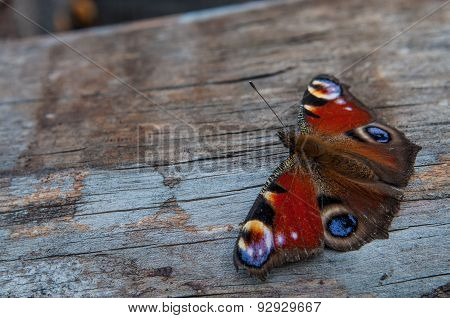 Butterfly On A Wooden Board