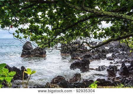 Ocean, rocks and vegetation in Maui, Hawaii