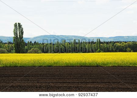 Of planted canola