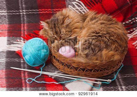 Wool Blanket And A Cat