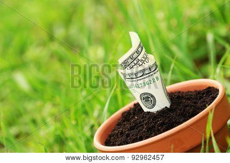 Money growing in flowerpot over grass grass background