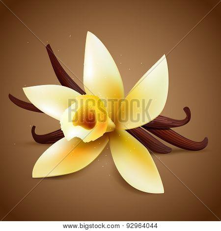 Realistic Vanilla Flower