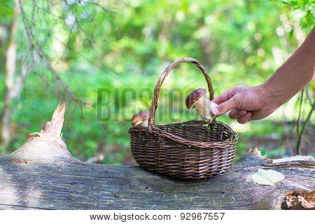 Wicker basket full of mushrooms in a forest