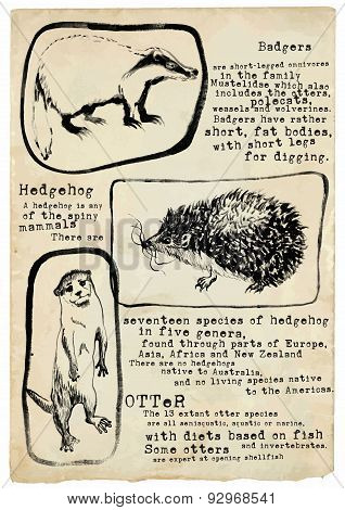 Badger, Hedgehog And Otter - Vector, Placard