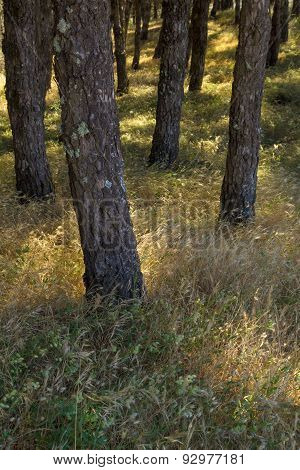 Natural Background Of Sun Lit Grasses