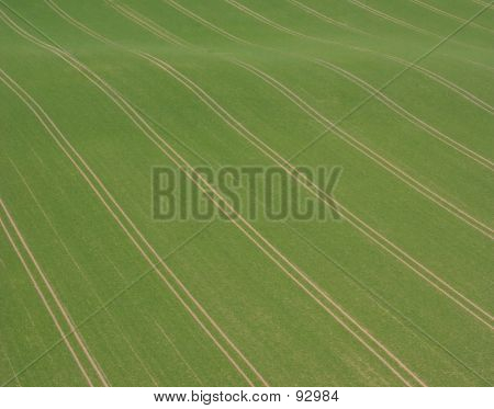 Field And Track