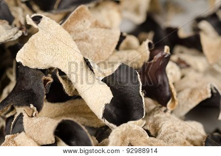 Jews Ear Mushroom
