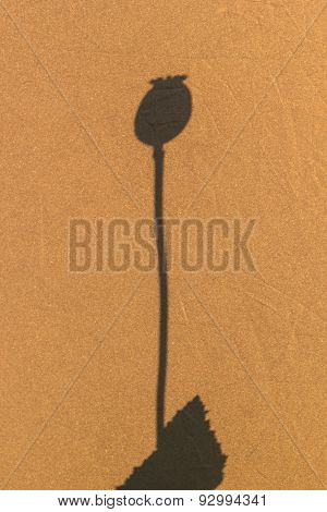 Shadow Of Opium Texture On Brown Background.