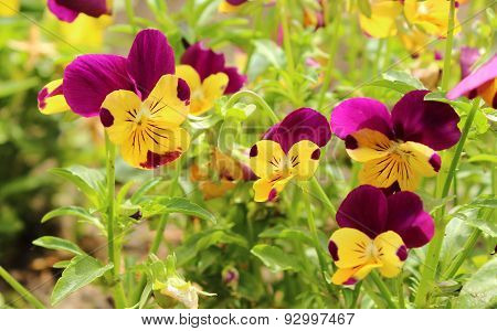 Colorful Flowers On Green Leaves Background
