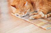 picture of laminate  - Peaceful Orange Red Tabby Cat Male Kitten Curled Up Sleeping In His Bed On Laminate Floor - JPG