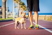 foto of dog-walker  - chihuahua dog close together to owner walking with leash outside at the park as friends - JPG