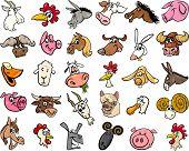picture of funny animals  - Cartoon Illustration of Funny Farm Animals Heads Big Set - JPG