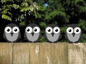 foto of bird fence  - Comical bird dawn chorus perched on a timber garden fence against a foliage background - JPG