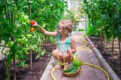 picture of root-crops  - Cute little girl collects crop cucumbers and tomatos in greenhouse - JPG