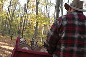image of hayride  - a flannel - JPG