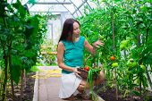 image of greenery  - young woman holding a basket of greenery and onion in greenhouse - JPG