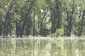stock photo of flood  - Flooded trees in Fish Creek during Calgary 2013 flood - JPG