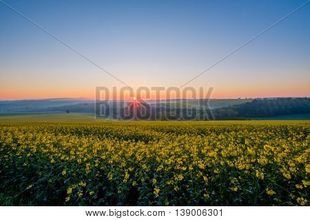 Sunrise under colza field in Czech Republic