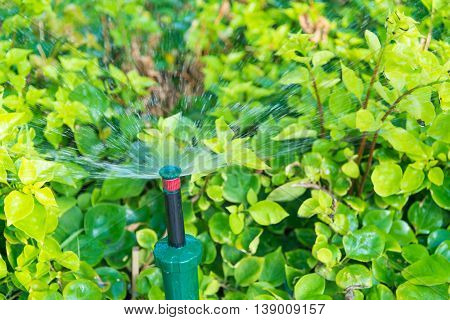 Water Springer In The Garden With Plant