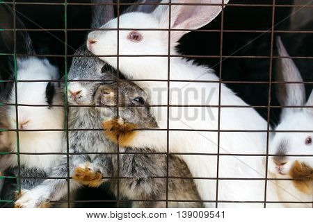 Cute rabbits grey and white fluffy bunnies sit in cage with wire mesh on dark background