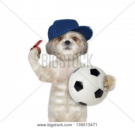 Dog with a ball and whistle -- isolated on white background