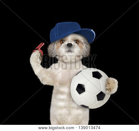 Dog with a ball and whistle -- isolated on black background